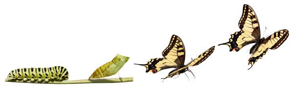 трансформация